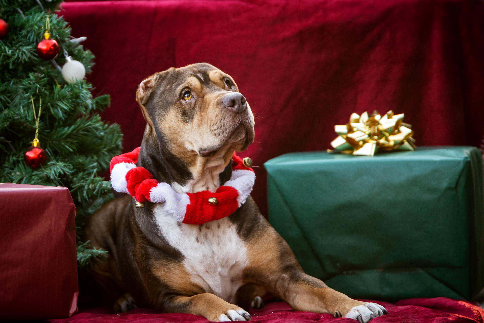 Christkind Aktion 2020-Hund-Mentes